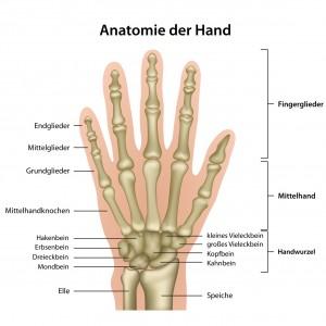 Anatomie der Hand mit Erluterung , deutsch